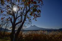 長崎公園の柿 - 風とこだま