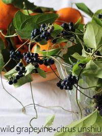 甘蔓と温州蜜柑が、鈴生りの霜月 - serendipity blog