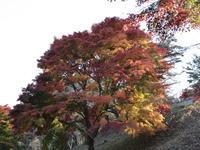 水沢観音の紅葉、サプライズも (2020/11/12) - toshiさんのお気楽ブログ