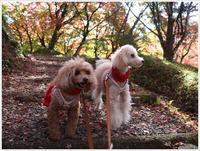 紅葉の名所での紅葉狩り、今年はこれで終わりだね、あとは近場。。。 - さくらおばちゃんの趣味悠遊
