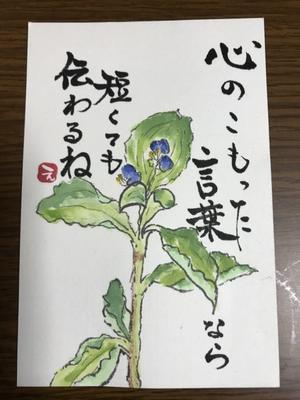 恵里子の絵手紙  口下手な私 - 惠里子の絵手紙と本と時々切り絵