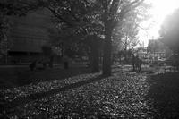 銀杏の公園で20201118 - Yoshi-A の写真の楽しみ