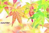 近郊の紅葉(その3) - ジージーライダーの自然彩彩