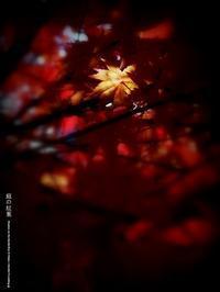 庭の紅葉 その2 - Illusion on the Borderline  II @へなちょこ魔術師