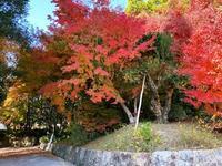 紅葉狩り・その1三景園(広島県三原市) - 本当に幸せなの?