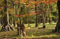 11月の森 - つれづれ日記