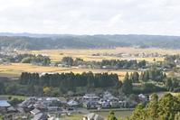 ススキと桜 - 千葉県いすみ環境と文化のさとセンター
