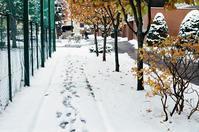 雪の通路と暖気による濃霧発生 - 照片画廊