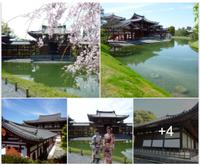 日本の美:外せないよね京都への旅『平等院鳳凰堂』 - 素晴らしきゴルフ仲間達!