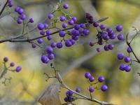 喧噪から逃れて散策(果実編) - 花と葉っぱ