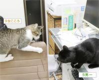 増える増える子猫たち - ちいさなチカラ
