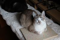 優先席 - ぎんネコ☆はうす