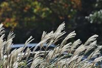 秋深む<散歩道> - そよ風のつぶやき