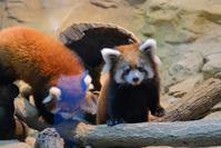 リアン・フランはじめまして - 動物園に嵌り中2