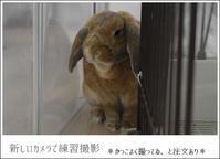 新しいカメラとイケメン??まり君 - Living with rabbit