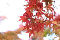紅葉狩りと今年のお礼参り - キラキラのある日々