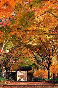 紅葉の絨毯にはちょっと早かったかな? でもキレイだったよ♪・・・佐野市仙波「金蔵院」(1) - 『私のデジタル写真眼』