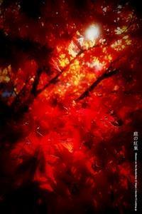庭の紅葉 その3 - Illusion on the Borderline  II @へなちょこ魔術師