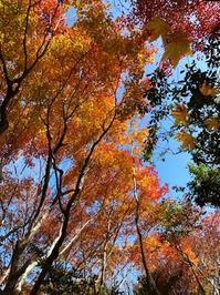 紅葉狩り・その2三景園(広島県三原市) - 本当に幸せなの?