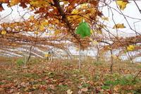 秋から冬へ - ~葡萄と田舎時間~ 西田葡萄園のブログ
