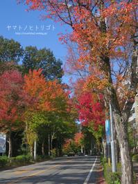 秋、犬のさんぽ - yamatoのひとりごと