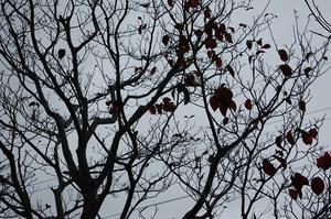 落葉樹の風情 - ニット美津江・ダイアリー