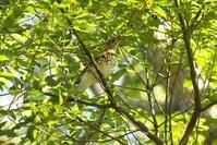 2020-198 里山で今季初撮りの野鳥 - 近隣の野鳥を探して2