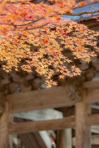 秋彩 1 - 気ままにお散歩