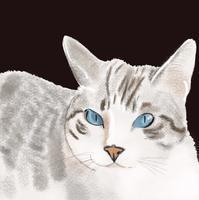 お絵かき - ぎんネコ☆はうす