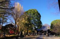 紅葉狩り~国宝・鑁阿寺へ - 季節の風を追いかけて