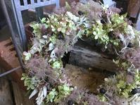 スモークツリーのリース - Ikuko's decoroom