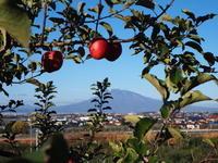 #みてみて平川*りんご収穫体験編~ - 津軽ジェンヌのcafe日記