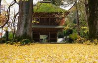 広徳寺の紅葉 - ようこそ風の散歩へ