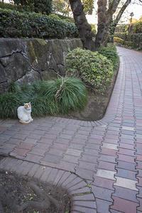 Happy Caturday -佇む- #35 - jinsnap(weblog on a snap shot)