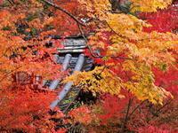 紅葉 15京都府 - ty4834 四季の写真Ⅱ