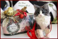 """【2011201】ノルウェージャンフォレストキャット子猫 - 羊毛フェルト """"うちのコ""""オーダー出来ました"""