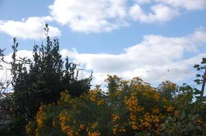 豆類に支柱&ネット張り・・・我が家の農園 -