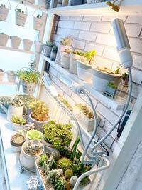 植物育成ライト* - Natural style*