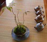 盆栽と茶壷 - Tea Wave  ~幸せの波動を感じて~