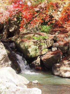 府中市三郎の滝の紅葉 - 自然派通信