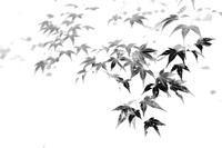 墨絵 - Capu-photo Digital photographic Laboratory