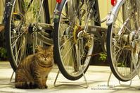 Happy Caturday -駐輪場で出逢ったぁ~♪- - It's only photo 2