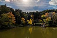 公園の紅葉「島田市中央公園」 - やきとりブログ