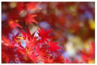 ネリネ - 花ありて 日々