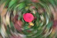 紅葉 回し撮り - 風のささやき
