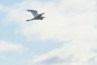 大空を飛ぶ - やぁやぁ。