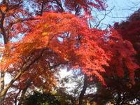 雀宮11月22日(日) - しんちゃんの七輪陶芸、12年の日常