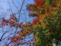 「紅葉の見える丘公園」巡り #2 - 神奈川徒歩々旅
