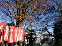「紅葉の見える丘公園」巡り #3 - 神奈川徒歩々旅