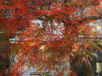窓辺の紅葉を楽しむ - 活花生活(2)